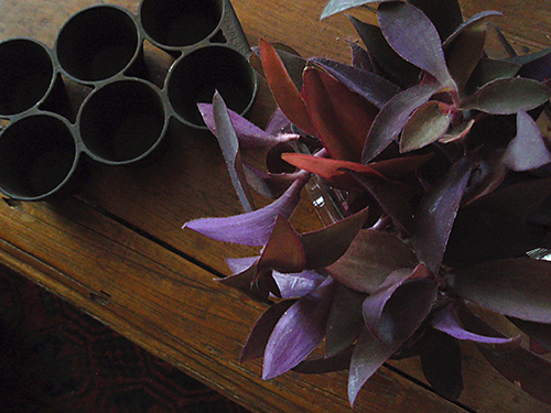 purple cuttings