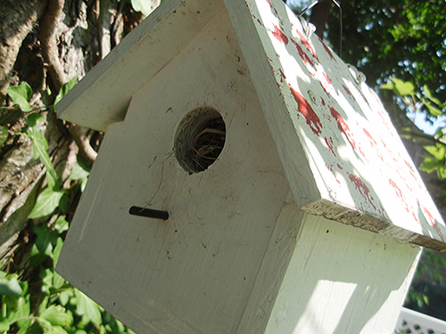back birdhouse