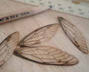 AJB cicada real wings