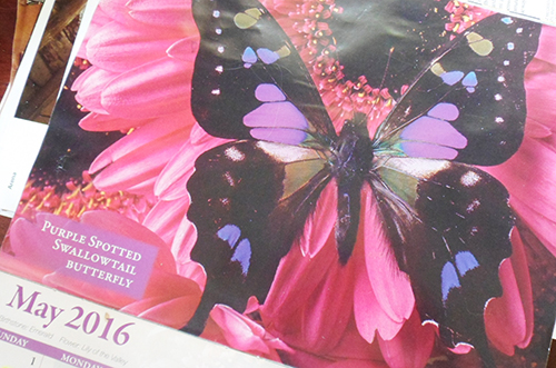 may butterfly calander pg